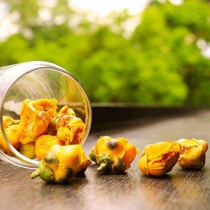 Trà hoa vàng Tam Đảo