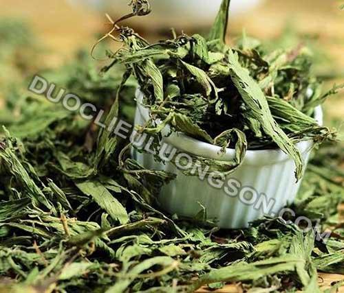 Cây cỏ ngọt - Vị thuốc hỗ trợ điều trị tiểu đường và giảm béo