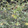 Hình ảnh cây cối say