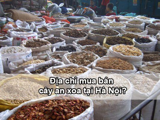 Địa chỉ mua bán cây an xoa tại Hà Nội