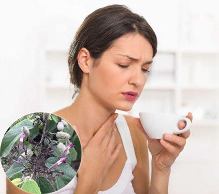 Vì sao khi sử dụng an xoa tươi lại ngứa cổ họng?