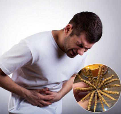 Tác dụng của đông trùng hạ thảo với người bị bệnh thận