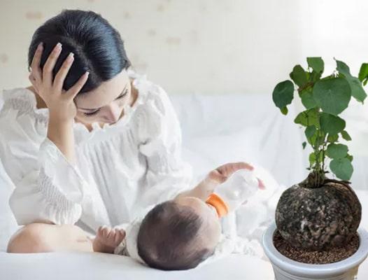 Phụ nữ sau sinh có dùng được củ bình vôi không?