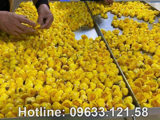 Mua trà hoa vàng ở Tuyên Quang