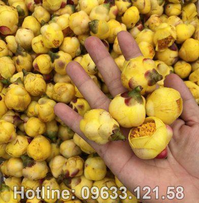 Mua trà hoa vàng ở Ninh Bình